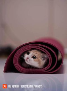 My moo does this with my yoga mat