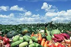 「野菜 生産者」の画像検索結果