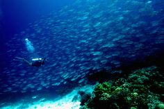 Tubbataha Reef- middle of Sulu Sea (East of Palawan)- Philippines