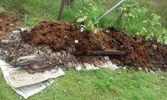 Aviser, stokker, flis, tang, kompost og jord blir fruktbart Hugelbed. Foto: Merethe Lauen
