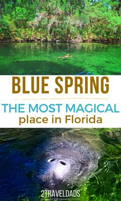 travel idea florida Everything you need to know about visiting Blue Spring State Park near Orlando, Florida. Swimming at the springs headwaters, manatees by the hundreds and when to visit the most beautiful spot in Florida. Places In Florida, Florida Vacation, Florida Travel, Vacation Spots, Cruise Vacation, Vacation Destinations, Vacation Ideas, Florida Trips, Greece Vacation