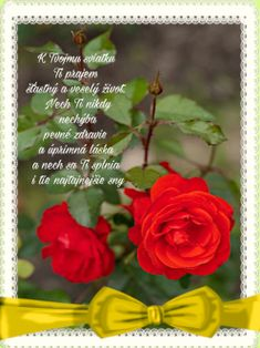 narodeninove priania December, Rose, Happy, Flowers, Plants, Pink, Ser Feliz, Plant, Roses