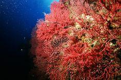 Diving Club ecosostenibile Sardegna:Centro Immersioni Sardegna