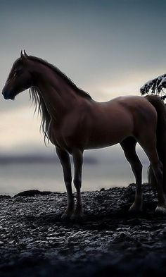 Wild dark Bay Mustang Stallion overlooking his domain.  /Beautiful EL.