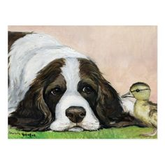 English Springer Spaniel and Duckling Art Postcard | Zazzle