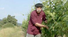 Philippe Babin, la passion de vin.