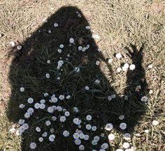 #girl #flowers #shadow