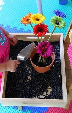 cute idea for a gardening theme(neater than dirt too).- black beans