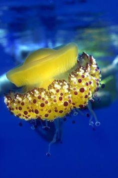 Underwater world - Onder water wereld Beautiful Sea Creatures, Deep Sea Creatures, Underwater Creatures, Underwater Life, Under The Ocean, Sea And Ocean, Beneath The Sea, Water Animals, Life Aquatic