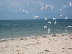 De kusten en zeeën van Mozambique kennen een rijke verscheidenheid aan dieren- en plantensoorten. De inwoners van Mozambique zijn in grote mate afhankelijk van deze springlevende gebieden. Helaas vormen overbevissing, schadelijke visserij en infrastrucutrele ontwikkelingen voor ernstige aantasting van deze gebieden. Het WWF spant zich in voor deze gebieden zodat toekomstige generaties er ook van kunnen genieten. Meer weten? Klik op de pin!