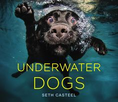 'Underwater Dogs' Feature In New Book Of... Oh, You Know (PHOTOS)