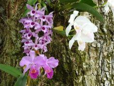 Cultivar orquídeas 3