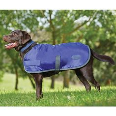 WeatherBeeta Windbreaker 420D Dog Coat 18 GrayBlu -- You can find more details by visiting the image link.