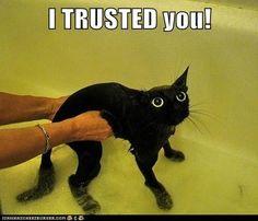You Betrayed Meeee!