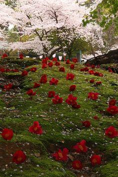 Spring, Kyoto, Japan