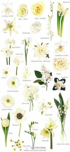A really useful guide for putting your bouquet together: WHITE AND CREAM