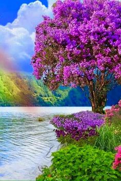 Sunset Lovers - ☆ rainbow ☆ - المنتدى - Google+