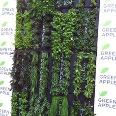 Green Living Wall Gallery | Green Living Technologies Vertical Garden Plants, Living Roofs, Plant Wall, Growing Plants, Gallery, Green, Roof Rack, Living Walls