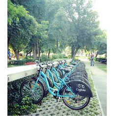 Take a ride (Cluj Napoca,Romania) Romania Travel, Places To Visit, Survival, Wanderlust, Earth, World, Nature, Life, Naturaleza