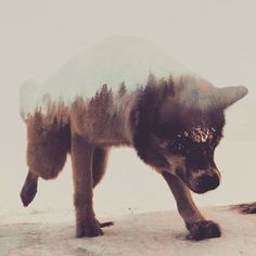 Soo rad ! Amazing double-exposure photography by @artworkbylie! - @proartists  @proartists