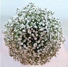 Learn how to make cool baby's breath decorations for your wedding, including bouquets, pew decor and reception decorations. Diy Wedding Flowers, Floral Wedding, Wedding Ideas, Wedding Decor, All Flowers, Large Flowers, Wedding Arrangements, Flower Arrangements, Table Arrangements