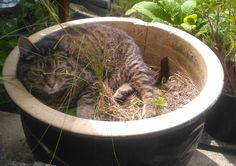 """My cat became a plant. She now identifies as a """"dandelion"""""""