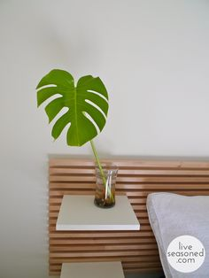 While split-leaf philodendrons can be overwhelmingly large, cuttings of their foliage are beautiful statement pieces, and can be easily rooted.