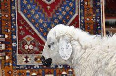 How to clean a Kilim rug