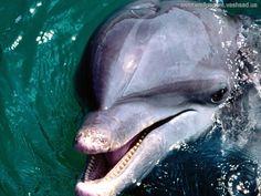 Dolphins - desktop images: http://wallpapic.com/animals/dolphins/wallpaper-1826