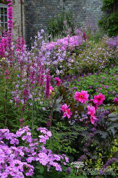 I'm leaving the French text on as I know some of the plant names are at the end ..... No idea what the first bit means !!     What a wonderful garden   <3....Dokonalá harmonie barev, tóny růžové a purpurové  podtrhuje tmavé olistění jiřinky (Dahlia). Dále na scéně Phlox, Lythrum, Thalictrum, Alchemila mollis.