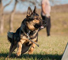 IPO/Schutzhund dog training equipment