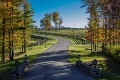 Winding driveway and pastures