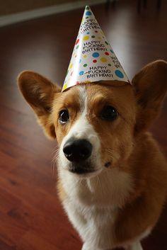 Corgi Birthday Wishes Happy Birthday Corgi, Puppy Birthday, Birthday Wishes, Birthday Cards, Cute Little Puppies, Puppy Love, Cute Puppies, Corgi Pictures, Animal Pictures