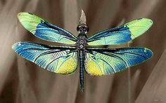 Metallic dragon-fly