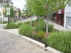 Gardens of native plants and trees collect runoff from sidewalks, storing and filtering water through large volumes of uncompacted soils in ...