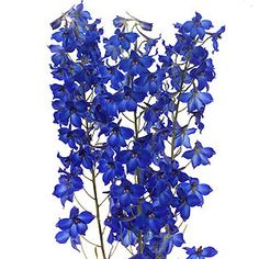 blue delphinium...these plus the green and white hydrangeas are for the bridesmaids bouquets, and the boutonnieres will be the white gladiola with greenery and the delphinium