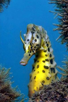 NATURE OCEAN - HORSE