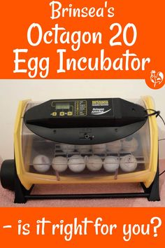 Brinsea's Octagon 20 incubator Incubating Chicken Eggs, Chicken Egg Colors, Egg Facts, Raising Meat Chickens, Egg Incubator, Backyard Chickens, Fermented Foods, Preserving Food, Are You The One