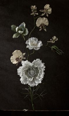 | @siangabari Botany, Dark Florals, Botanical Flowers, Botanical Art, Botanical Illustration, Illustration Art, Beautiful Flowers, White Flowers, Greenery
