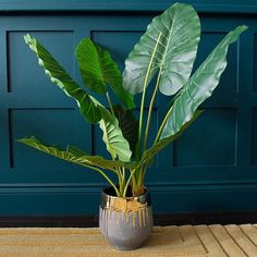 Bring the lushness of a tropical plant to your interior styling with an artificial philo potted house plant. With its large broad textured leaves it appears as if from a tropical rain forest straight into your home. Fake Plants Decor, House Plants Decor, Real Plants, Plant Decor, Fruit Plants, Tropical Plants, Indoor Flowers, Indoor Plants, Fake Flowers