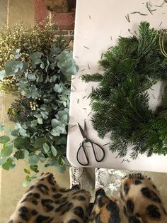 Christmas // How to Make a Wreath - Roses and Rolltops How To Make Wreaths, Door Wreaths, Christmas Wreaths, Roses, Fresh, Pink, Rose