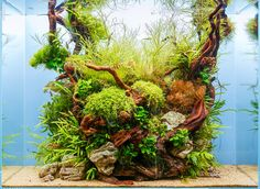 The final shot of our #scapersday tank, Blue Lagoon, in a full ADA setup (60x30x45 cm) A bit too quadrant — but unique :)) go ahead and like it or any of the others on the greenaqua.hu facebook page