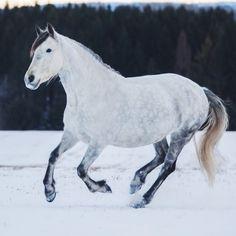 Wild Horses   TheSpectrumWorkshop.com • Prints & Artist Designed Goods Inspired by Life's Adventures