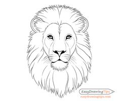 How to Draw Lion Face & Head Step by Step – EasyDrawingTips – Art Center Lion Drawing Simple, Lion Head Drawing, Line Drawing, Drawing Sketches, Face Proportions Drawing, Dog Lion Mane, Lion Sketch, Art Minimaliste, Lion Painting