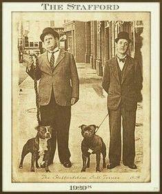 Uplifting So You Want A American Pit Bull Terrier Ideas. Fabulous So You Want A American Pit Bull Terrier Ideas. Dog Photos, Dog Pictures, Yorky Terrier, Laurel Et Hardy, Stan Laurel Oliver Hardy, Nanny Dog, Pit Bull Love, Vintage Dog, Old Dogs