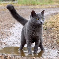 Funny Cute Cats, Cute Funny Animals, Cute Baby Animals, Animals And Pets, Cute Animal Humor, Wild Animals, Cute Animal Videos, Funny Animal Pictures, Beautiful Cats