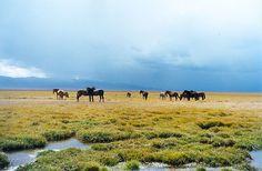 Paturage près du lac Son Kul - Kirghizistan