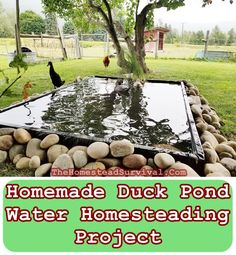 """This Homemade Duck Pond Water Homesteading Project was made by an amazingly resourceful woman named """"Jordie"""". She has chickens, ducks, geese and they"""