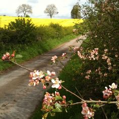 the Cotswolds are gorgeous this morning by Charlotte & Co.
