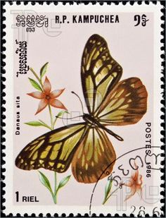 Image of Kampuchea -  circa 1986:postage stamp features a Danaus Sita butterfly, circa 1986 in Democratic Kampuchea.